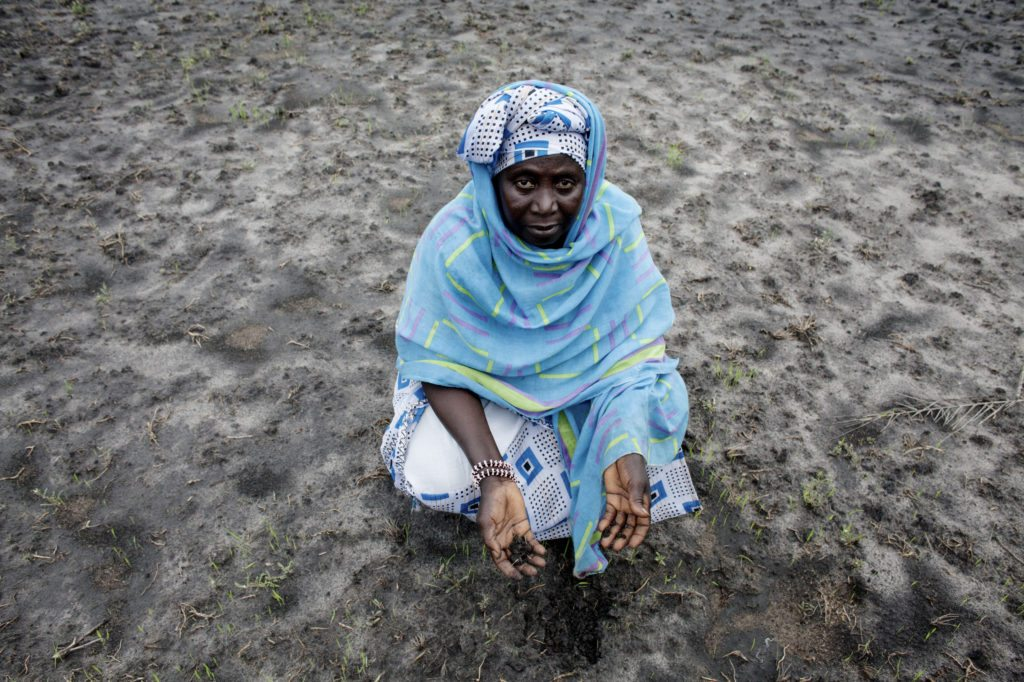 Rice farmer Hawa Jammeh inspects soil that is overrun by salt in Nemakunku, Gambia. Photo: Jane Hahn/ActionAid