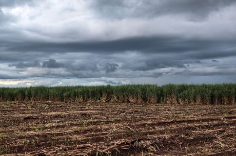 Local Farmers in Brazil Risk Losing Their Land to Biofuels Production