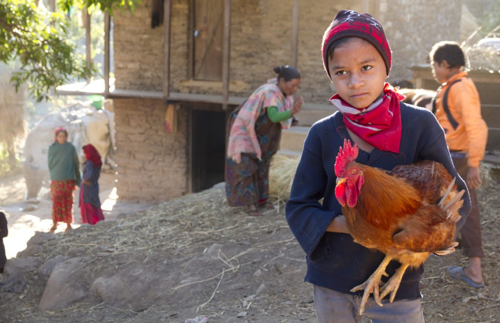 A child holds a rooster.