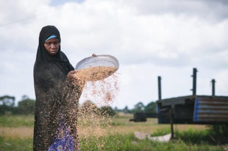 The Expanding Rice Production Project in Tanzania