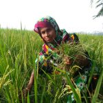 Will the UN Food Systems Summit really solve hunger and climate change?