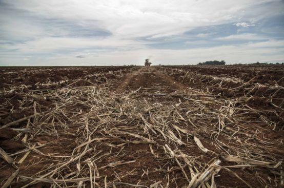 A sugarcane plantation near the Roseli Nunes Settlement, Brazil.