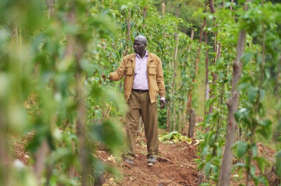 The PFA project has increased passionfruit farmer John's access to markets in Kenya and abroad. Photo: Allan Gichigi