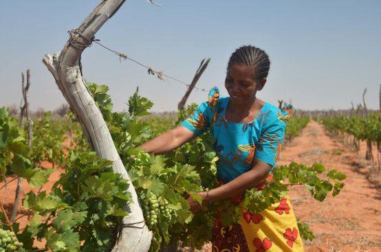 Tanzanian grape farmer Nuru received training through the PFA project to conduct social audits. Photo: Allan Gichigi/ActionAid